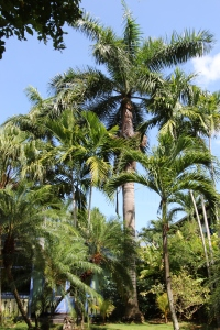 Palm Trees at Country Country