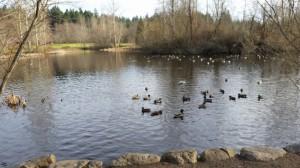 Duck Rox